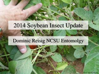 2014 Soybean Insect Update