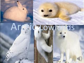 Arctic  Lowlands