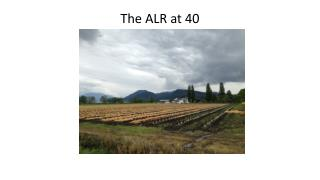 The ALR at 40