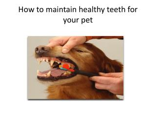 How to maintain healthy teeth for your pet