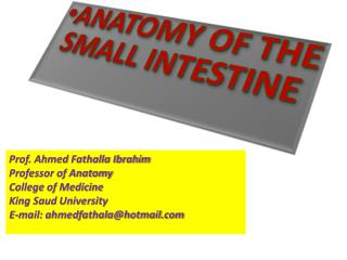 ANATOMY OF THE SMALL INTESTINE