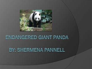 Endangered Giant Panda By:  SherMena  Pannell