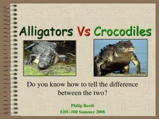 Alligators Vs Crocodiles