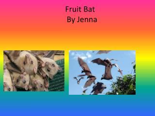 Fruit Bat By Jenna