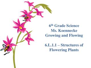 6 th  Grade Science Ms. Koennecke Growing and Flowing 6.L.1.1 – Structures of Flowering Plants