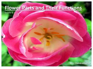 Flower Parts and Their Functions Grade 6