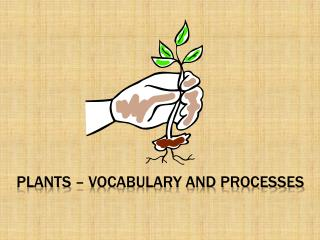 Plants – Vocabulary and Processes