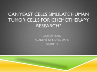 Can Yeast Cells Simulate HUMAN TUMOR CELLS FOR CHEMOTHERAPY RESEARCH?