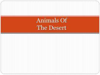 Animals Of The Desert