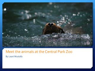 Meet the animals at the Central Park  Zoo