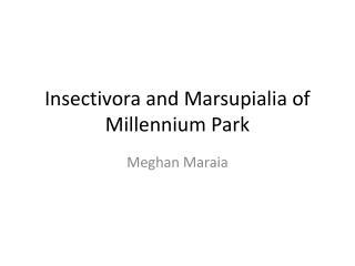 Insectivora and Marsupialia of Millennium Park