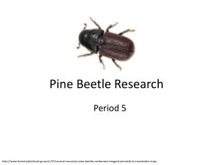 Pine Beetle Research