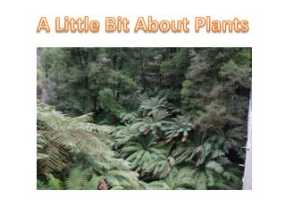 A Little Bit About Plants