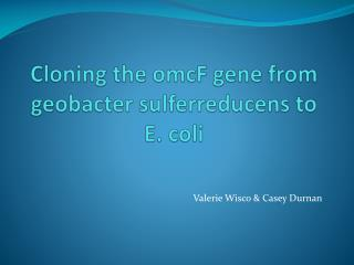 Cloning the  omcF  gene from  geobacter sulferreducens  to E. coli