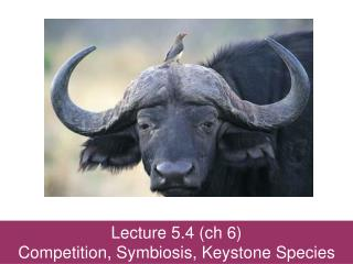 Lecture 5.4 ( ch  6) Competition, Symbiosis, Keystone Species
