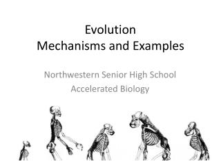 Evolution Mechanisms and Examples