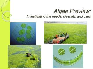 Algae Preview: Investigating the needs, diversity, and uses