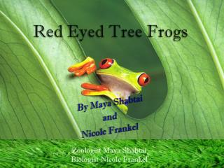 Red  E yed  T ree Frogs