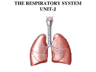 THE RESPIRATORY SYSTEM UNIT-J