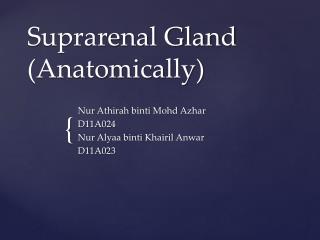 Suprarenal Gland (Anatomically)