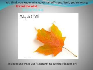 You think you know why leaves fall off trees. Well, you're wrong.