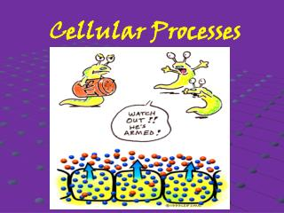 Cellular Processes