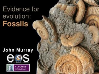 Evidence for evolution:  Fossils