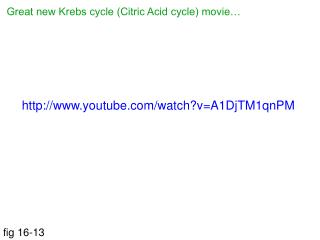 Great new Krebs cycle (Citric Acid cycle) movie…
