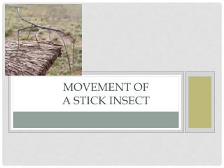 Movement of  a Stick Insect