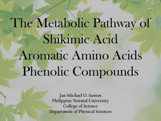 The Metabolic Pathway of Shikimic  Acid  Aromatic Amino Acids Phenolic  Compounds