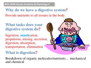 BIOL 2030  Human Anatomy & Physiology II