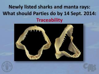 Newly listed sharks  and  manta  rays: What should Parties do by 14 Sept. 2014:  Traceability
