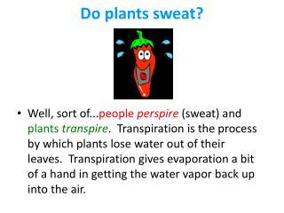 Do plants sweat?