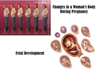 Changes in a Woman's Body During Pregnancy