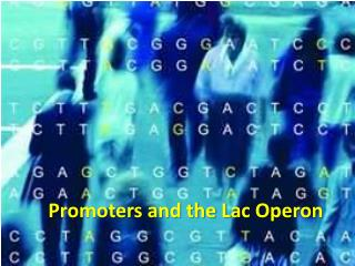 Promoters and the Lac  Operon