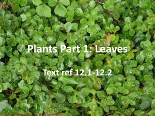 Plants Part 1: Leaves
