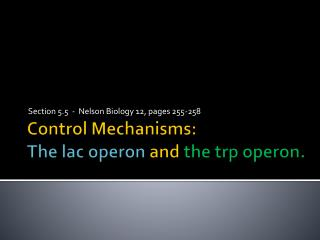 Control Mechanisms: The  lac operon and  the  trp operon .
