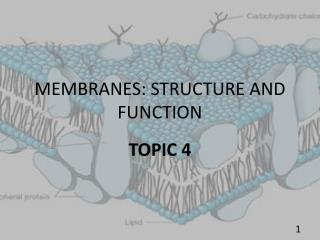 MEMBRANES: STRUCTURE AND FUNCTION