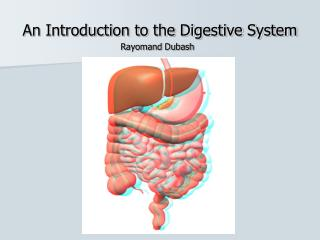 An Introduction to the Digestive System