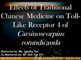 Effects of Traditional Chinese Medicine on Toll-Like Receptor 4 of  Carsinoscorpius rotundicauda