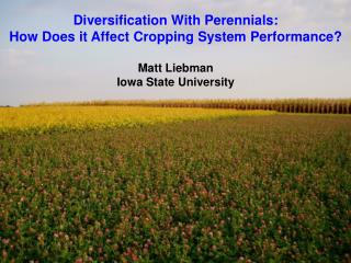 Diversification With Perennials:  How  Does it Affect  Cropping System  Performance? Matt Liebman