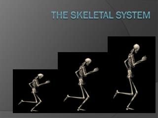 The Skeletal system