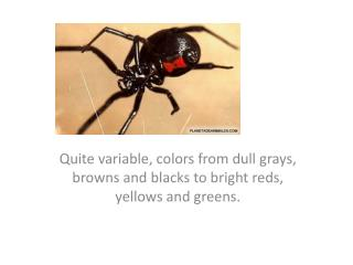 Quite variable, colors from dull grays, browns and blacks to bright reds, yellows and greens.