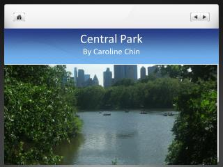 Central Park By Caroline Chin
