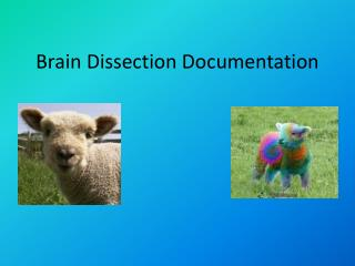 Brain Dissection Documentation