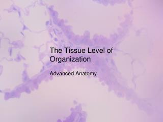 The Tissue Level of Organization