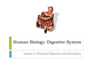 Human Biology: Digestive System