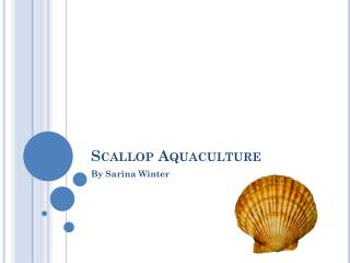 Scallop Aquaculture