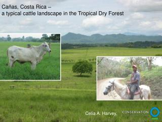 Cañas, Costa Rica –  a typical cattle landscape in the Tropical Dry Forest
