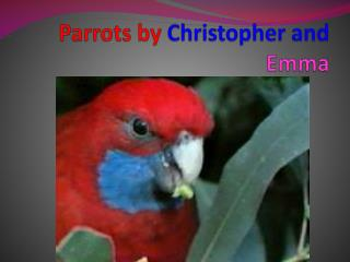 Parrots by  C hristopher and  Emma